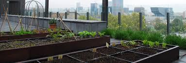 urban vegetable garden at u201cescola dels encants u201d carrer del