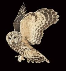 was an owl the real culprit in the peterson murder mystery audubon