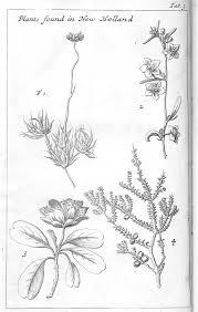 native plants in france william dampier