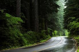 Oregon Forest images Willamette forest ranks no 1 in carbon storage jpg