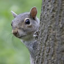a gallery of squirrels doing things they shouldn u0027t hgtv
