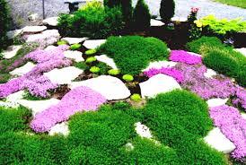 succulent rock garden ideas d home design houzz landscaping cactus