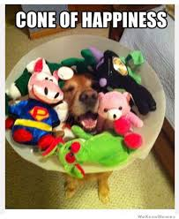 Happiness Meme - cone of happiness weknowmemes