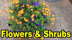 names of different flowers and shrubs youtube
