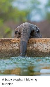 Elephant Meme - a baby elephant blowing bubbles baby it s cold outside meme on
