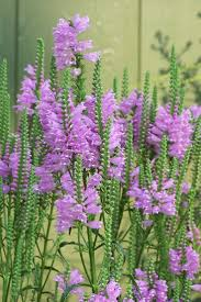 native plants of michigan 16 best native michigan plant palette images on pinterest flower