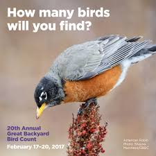 the great backyard bird count 2017 wyncote audubon society