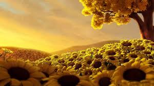 foto wallpaper bunga matahari sunrise over sunflower mywall
