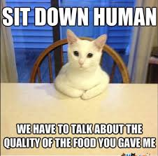Mean Cat Memes - share tweet pin mail oh hi ummm meaow there there it s