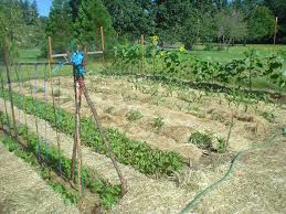 What Kind Of Mulch For Vegetable Garden by The Sharing Gardens The Benefits Of Deep Mulching