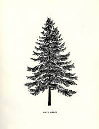 these tree illustrations are bushying forth with awesomeness