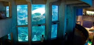 Aquarium For Home by Aquariums In Texas Aquariums Aquariums In San Antonio Aquariums