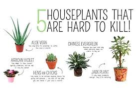 best indoor house plants best indoor house plants house plants near me dynamicpeople club