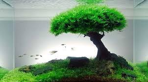 Java Moss Aquascape Tree Moss Aquascape