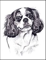 cavalier king charles spaniel cards animal by grimes
