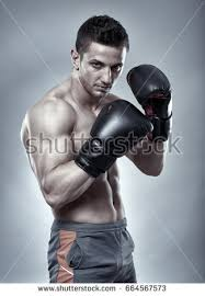 boxer dog in boxing gloves boxer stock images royalty free images u0026 vectors shutterstock