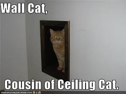 Ceiling Cat Meme - yes ceiling cat lifemusicfun love and play every day
