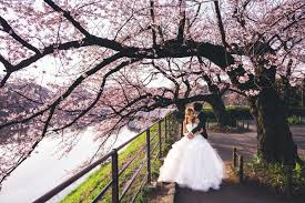 cherry blossom wedding blossoms dating and marriage