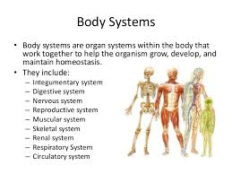 Human Anatomy And Body Systems Overview Of Body Systems