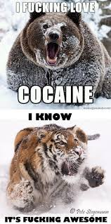 Fucking Awesome Meme - image 103738 cocaine bear know your meme