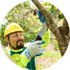 bartlett tree experts our tree and shrub care services