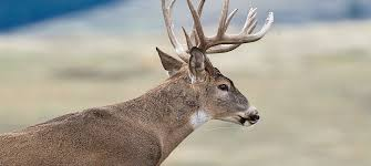 deer hunting tips and tactics for opening day outdoor life