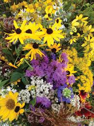 flagstaff native plant and seed taming wildflowers by miriam goldberger a garden book review