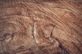 Rock Laminate Flooring Free Images Tree Rock Texture Floor Trunk Formation Brown