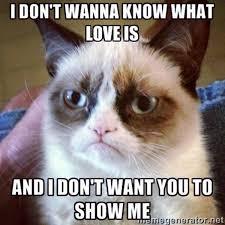 New Grumpy Cat Meme - 16 of the best grumpy cat memes catster