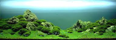 amano aquascape takashi amano and his underwater approach to landscaping