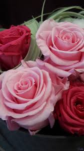 preserved roses preserved roses box