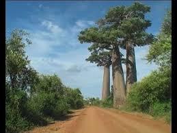 madagascar iii motorcycle land baobab lemur