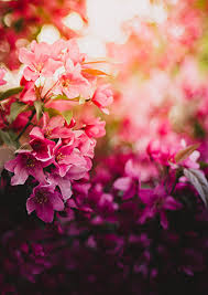 flowers miami about yosvi florist miami fl florist