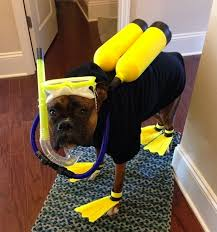 our favorite diy halloween costume ideas dog halloween