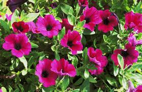using georgia native plants hummingbird favorites in my garden top 10 flowers to attract hummingbirds