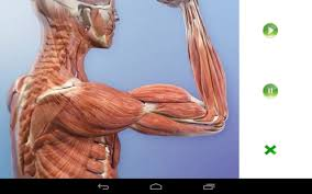 Interactive Muscle Anatomy Visual Anatomy Free Android Apps On Google Play