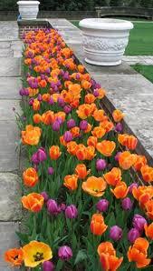 best 25 tulips garden ideas on pinterest spring flowers