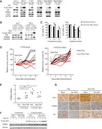 Breast Cancer Flags Breast Cancer Resistance To Antiestrogens Is Enhanced By Increased
