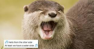 Otter Meme - i can has cheezburger otter funny animals online cheezburger