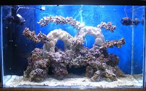 Aquascape Reef Garf Scott Morell U0027s Vho Reef Aquarium Update