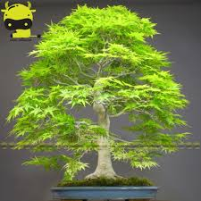 green japanese maple promotion shop for promotional green japanese