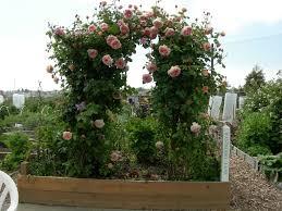 trellis plants wooden u2013 outdoor decorations