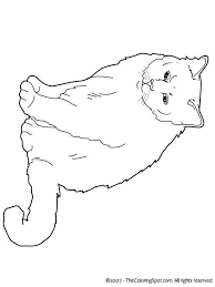 211 art cat coloring images coloring books