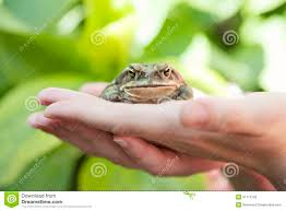 Ugly Green Hands Holding An Ugly Toad Royalty Free Stock Photo Image 31112195