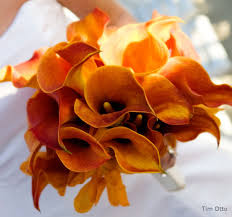 calla colors aileen s bouquet monday calla lilies san diego wedding