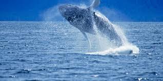 glacier u0026 wildlife cruises visit anchorage
