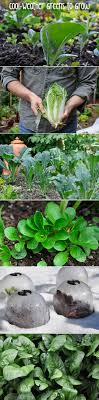 best 25 winter greenhouse ideas on winter vegetables