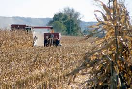 Pumpkin Farms In Wisconsin Dells by Harvest Of A Lifetime U0027 Farmers U0027 Bumper Crops Tempered By Low