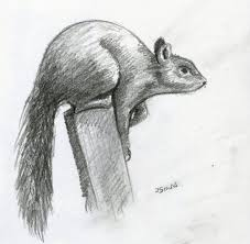 pencil sketch of animals emma bates observational drawing 2