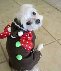 gingerbread man halloween costumes for big dogs